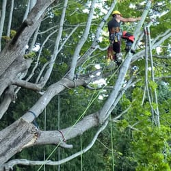 tree service near me reviews
