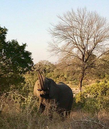 kruger national park safari reviews