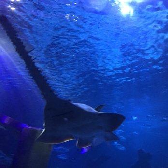 sea life minnesota aquarium reviews
