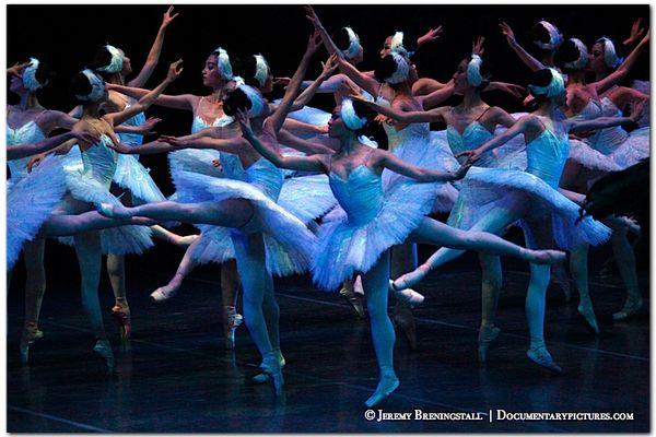 shanghai ballet swan lake reviews