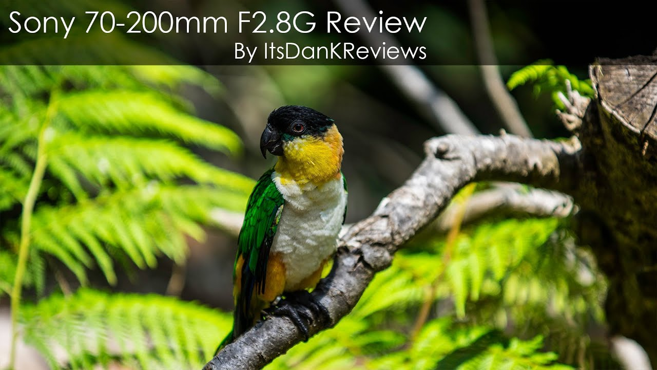 sony 70 200 f2 8 review